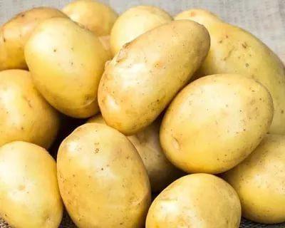 картофель брянский деликатес описание сорта