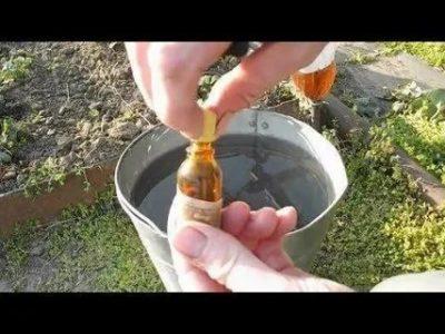 полив клубники йодом