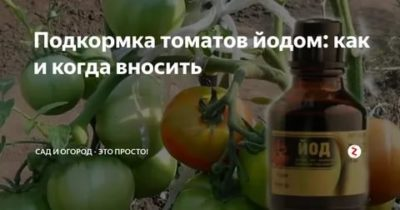 йод для помидор и огурцов как удобрение