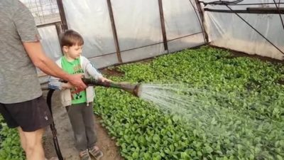 как поливать редис