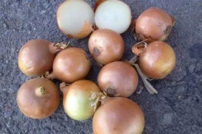лук халцедон выращивание из семян