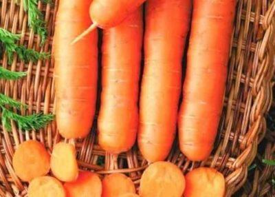 лучшие сорта моркови для подмосковья открытый грунт