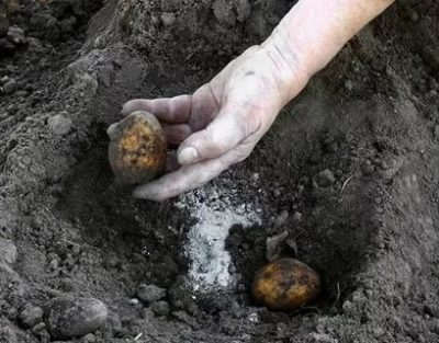 удобрение для картофеля осенью