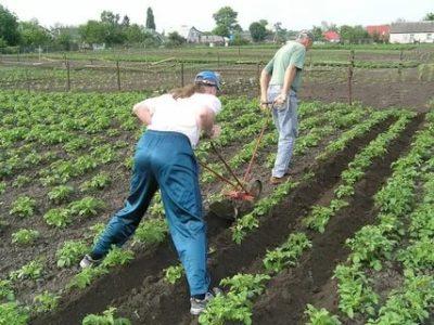 как быстро прополоть картошку