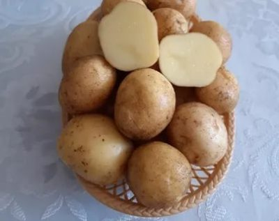 сорт картофеля валентина