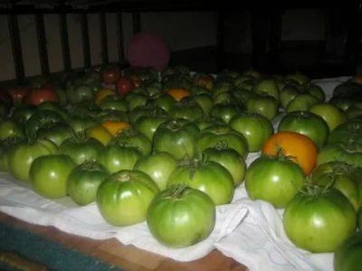 как хранить зеленые помидоры чтобы они покраснели