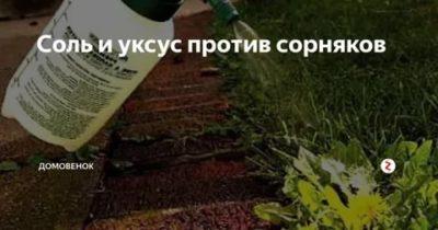 уксус и соль против сорняков пропорции