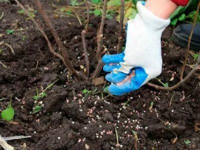 удобрения при посадке малины осенью
