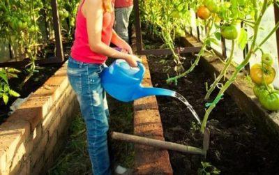 можно поливать помидоры холодной водой
