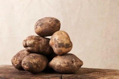 картофель сорт взрывной