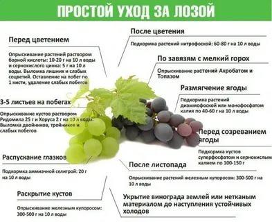 можно ли опрыскивать виноград во время цветения