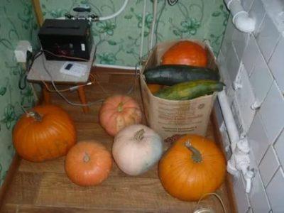 как сохранить тыкву на зиму в квартире