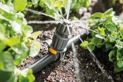 капельный полив овощей