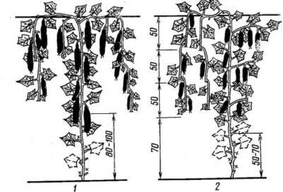 пасынкование огурцов в теплице
