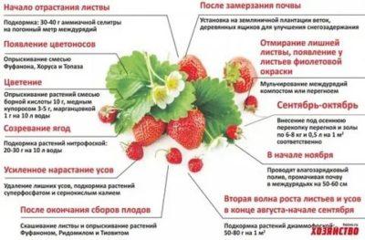 чем удобрять клубнику во время цветения и плодоношения