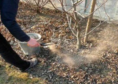 удобрение плодовых деревьев осенью