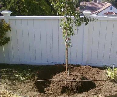 какую грушу лучше посадить