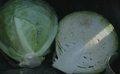 сорта капусты для квашения на зиму