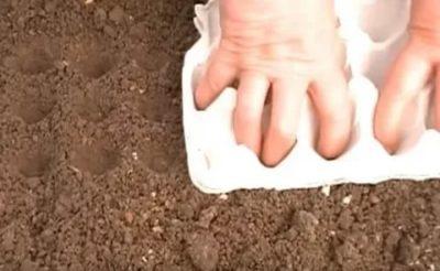 как посадить морковь в гранулах