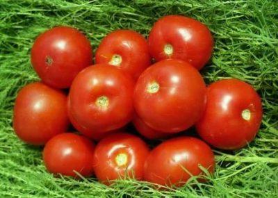 сорт томатов волгоградский