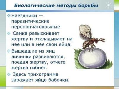 биологические способы борьбы с вредителями