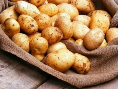 сорт картофеля мелоди
