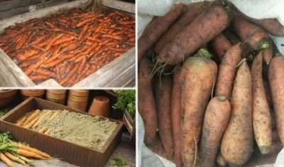как хранить морковь в подвале зимой