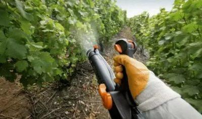 опрыскивание винограда весной