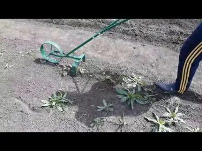 прополка сорняков культиватором