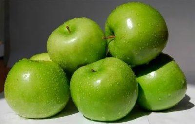 семеренко сорт яблок