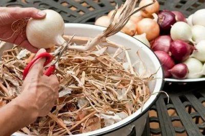 как обрезать лук после уборки