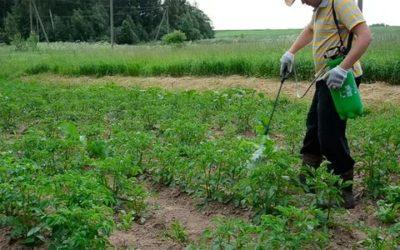 чем опрыскивать картофель от фитофторы