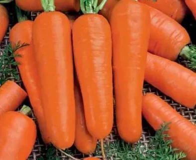 лучшие семена моркови для хранения