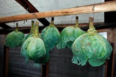 как хранить капусту на балконе