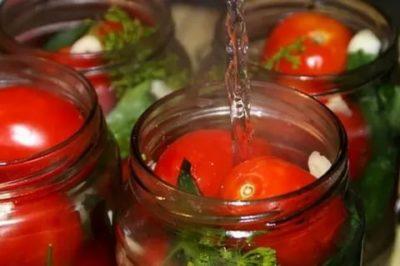 помидоры соленые в банках на зиму горячим способом