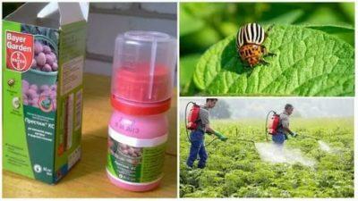 когда можно травить колорадского жука