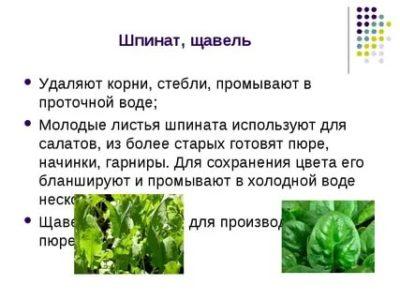чем отличается шпинат от щавеля