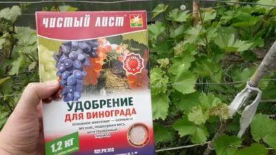 калийные удобрения для винограда