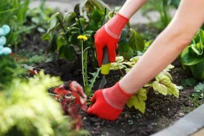 борьба с сорняками весной