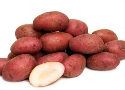 картофель дева описание сорта