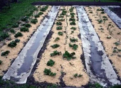 опилки от сорняков