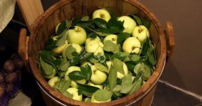 моченые в бочке яблоки