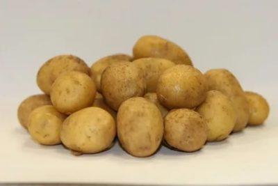 сорт картофеля латона