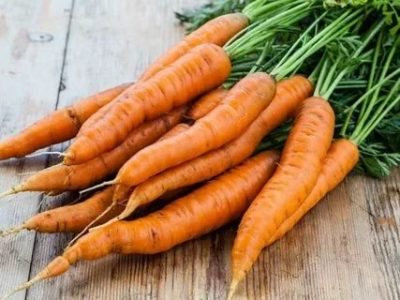 семена моркови для сибири