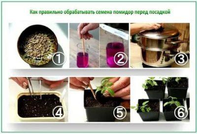 чем обработать семена помидор перед посадкой на рассаду