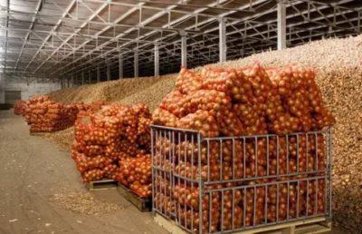 технология хранения овощей