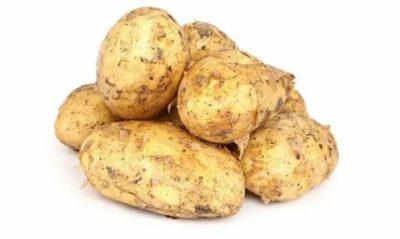 картофель ласунок описание сорта