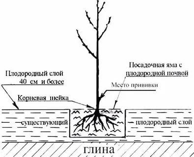 как посадить вишню весной в подмосковье