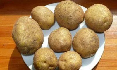 винета сорт картофеля