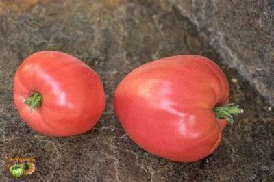 сорт томата кардинал